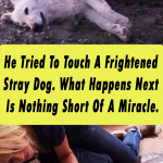 He Tried To Touch A Frightened Stray Dog