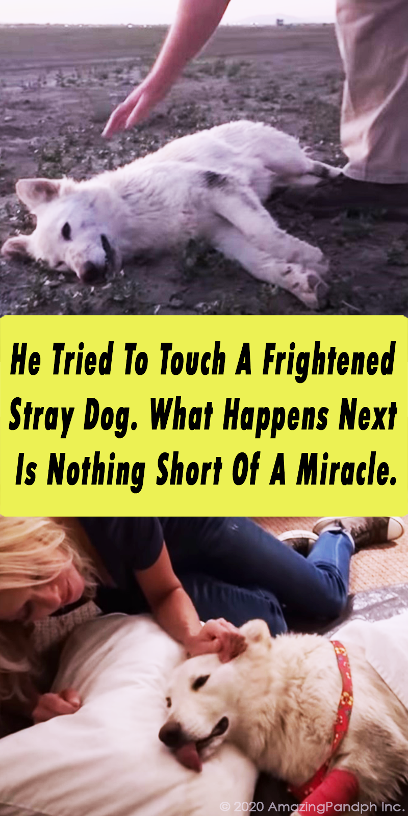 animals, viral, dogs, rescue, save, life, helping, pets, puppy, accident, tar, drenched,