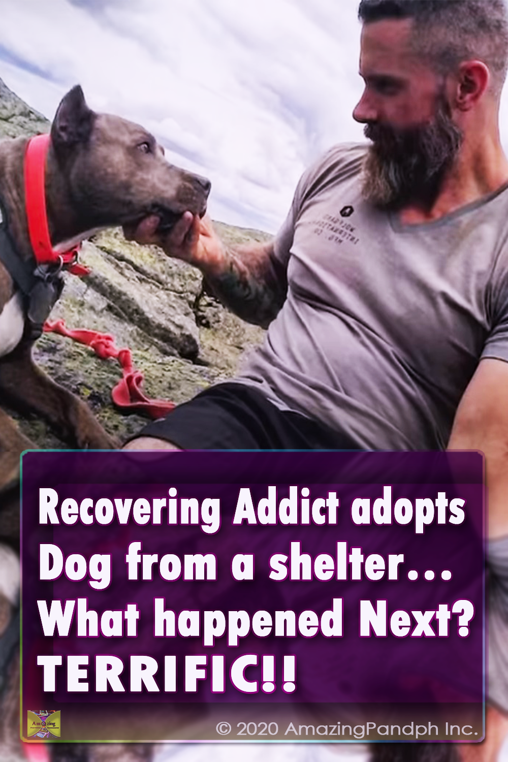 animal, video, animals ,dogs, cats, dog videos, cat videos, pit bull, pibble, recovery, addiction, hiking, hiking with dog, dog friendship, best stories, terrific, awesome, unbelievable,