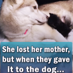 She lost her mother but when they gave it to the dog