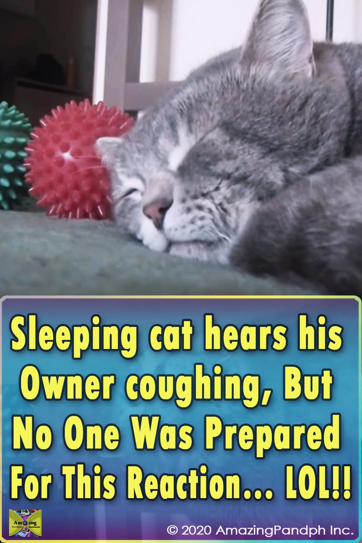 cat, cats, funny, cute, Cuteness, cough, quack, sleep, sneezing, Kitty, Kitten, Kittens, Meow, Pet,