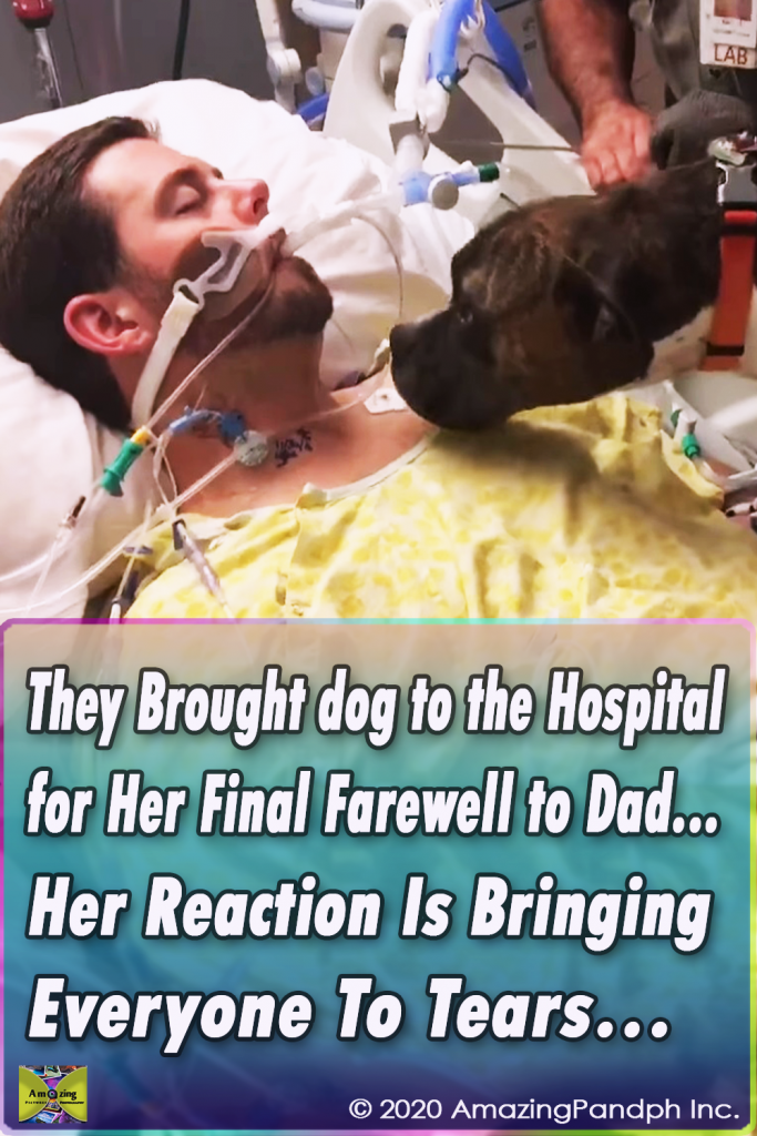 viral,video,incredible,interview,accident,veteran,dog,pets,animals,touching,attack,animal attack,dog attack,touching video,touchingstorie,viral video,viral stuff,viral storie,best sories,most viewed stories,stories for dogs,stories for pets,hospital