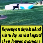 They managed to play hide and seek with the dog