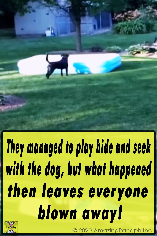 Kyoot, AFV, AFV Animals, animals, fun, funny, pets, pet, funniest video, animals video, pets video,