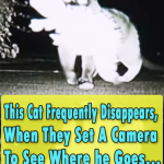 This Cat Frequently Disappears