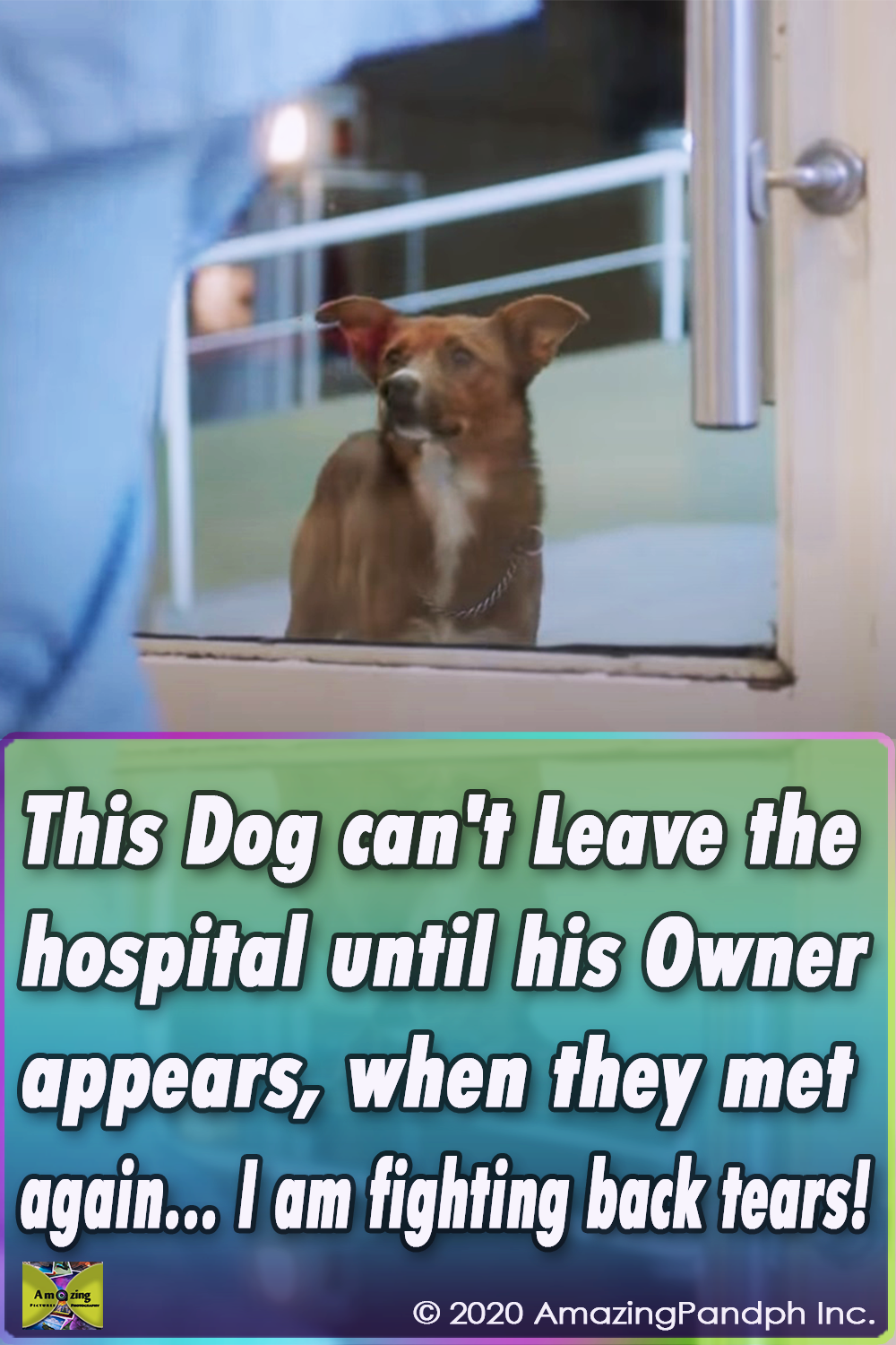 viral,video,touching storie,magical,warm your heart,approaching,animal,dog,sik owner,special needs,most shared,most watched,must go viral,storie must watched,hospital,commercial