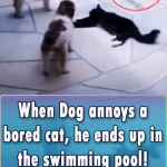 When Dog annoys a bored cat