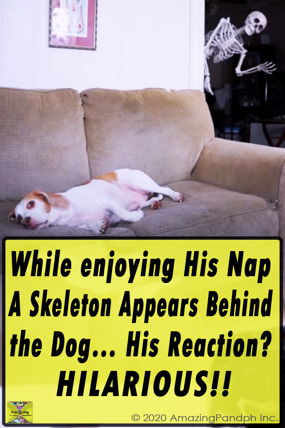 maymo, beagle, dog, dogs, funny dogs, funny dog, funny, skeleton, prank, halloween, halloween prank, dog vs skeleton, dog scared, dog terrified, cute dog,viral video,amazingpandph video,best of,coolest prank,viral post,viral stuff,most viewed,most watched,most shared