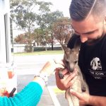 Funny, Video, Skit, Prank, Pranks, Joke, Jack, odoherty, real, australian, australia, youtuber, facebook, tradie, bloke, teens,kangaroo,new pet,adopt kangaroo,weird adoption