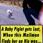 A Baby Piglet gets Lost