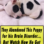 viral,video,brain disorder,deformities,dogs,pets,puppies,puppy,pugs,viral video,cute,cute puppies,amazing,most viewed,most shared,most watched,petey,puppy,abandoned puppy