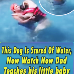 Mastiff, swimming, swim, lessons, teach, dog, pool, life-jacket, sailor, English Mastiff ,Animal Breed,Water, Dogs, Cute, Lesson, summer, Swimming,viral video,most viewed,best of