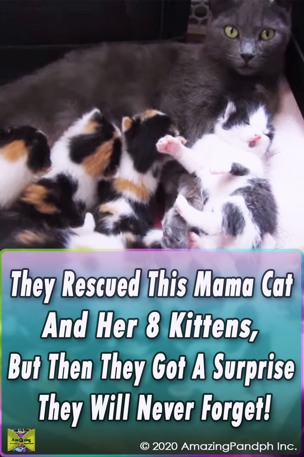 animals,viral,cats,rescue,save,life,helping,pets,kitten,lost,cat,kittens,viral video,viral stuff,viral post,most viewed,