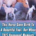 Horse Gave Birth To A Beautiful Twin