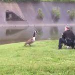 Mother love, Goose, Bird, Rescue, Cop, Unbelievable, Astonishing,