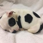 They Abandoned This Puppy for his Brain Disorder