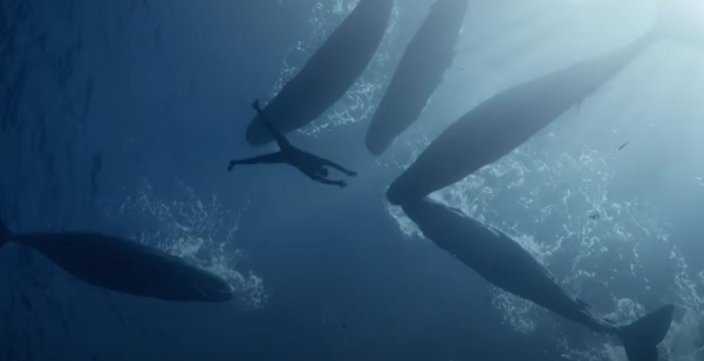 freediving, Nice, Dive, Ocean, Whales, Mexico, Japan, Mauritius, Travel, Short Film, Deep Breath, Adventure, Diver, Diving Suit,